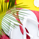 Tropical Background Palm Trees Branches - PhotoDune Item for Sale