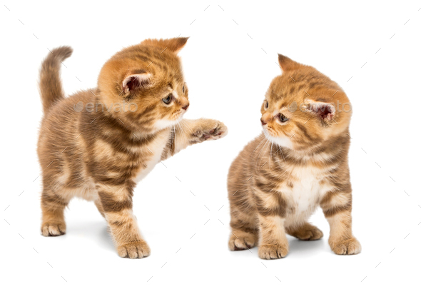 Two little kittens - Stock Photo - Images