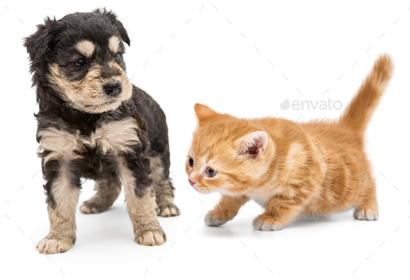 Puppy and ginger kitten - Stock Photo - Images