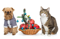 Dog and cat sitting near a Christmas basket - PhotoDune Item for Sale
