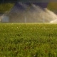 Green Grass Is Irrigating with Water Sprinkler - VideoHive Item for Sale