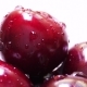 Drops of Water on Fresh Cherry Berries - VideoHive Item for Sale
