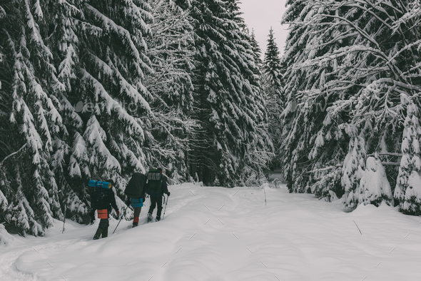 Three tourists with a backpacks in the snowy forest - Stock Photo - Images