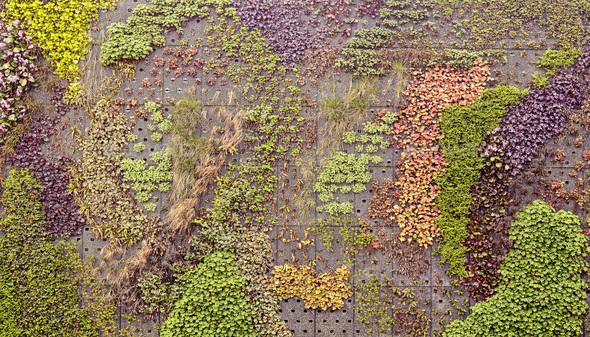 Climbing plants display - Stock Photo - Images