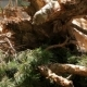 Deforestation Pine Trees - VideoHive Item for Sale