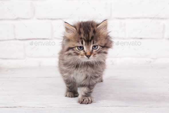 Young fluffy kitten - Stock Photo - Images
