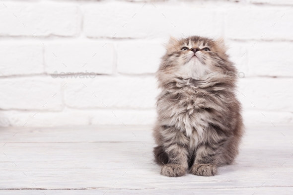 Young fluffy kitten looks very glad and peaceful - Stock Photo - Images