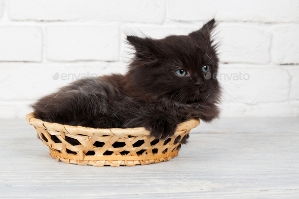 Young black fluffy kitten in the basket - Stock Photo - Images