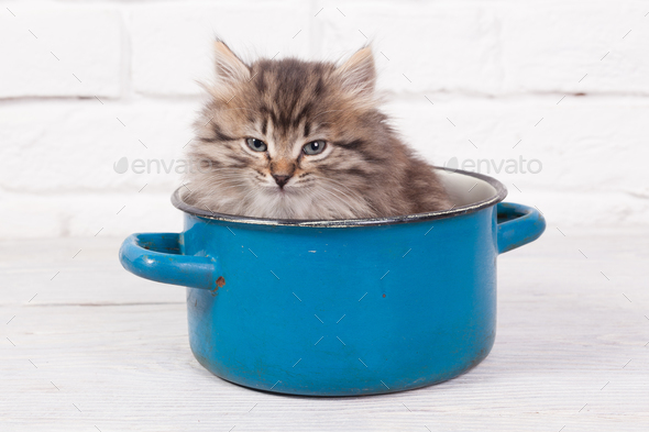 Young fluffy kitten in the pot - Stock Photo - Images