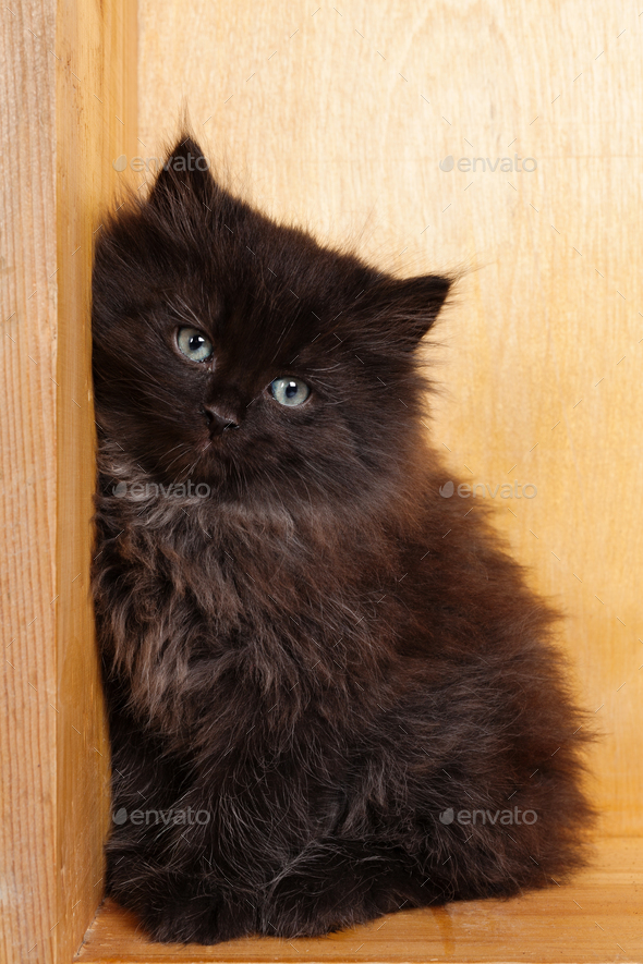 Young black fluffy kitten - Stock Photo - Images