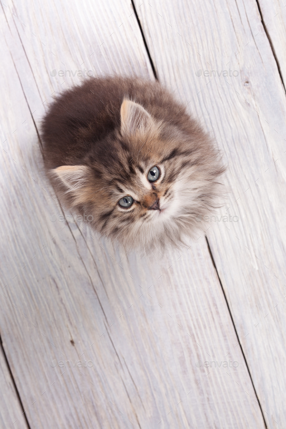 Young fluffy kitten looking up - Stock Photo - Images