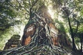 Ancient temple under roots of the tree - PhotoDune Item for Sale