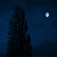 Tall Tree Sways At Night - VideoHive Item for Sale