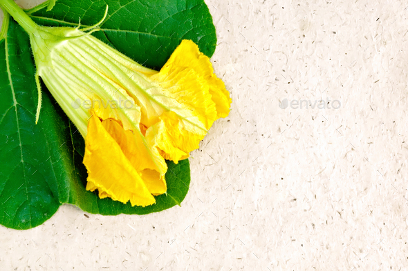 Pumpkin flower on wrapping paper - Stock Photo - Images