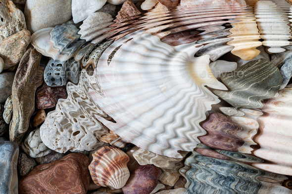 Water ripples above pebbles and seashells - Stock Photo - Images