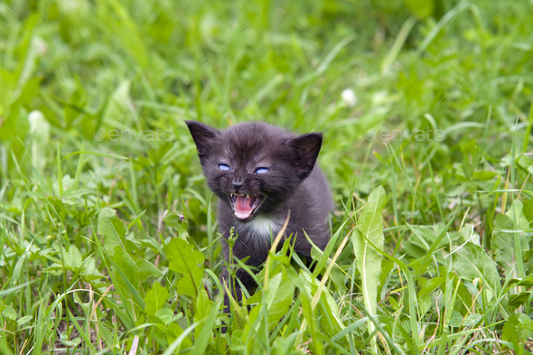 Small kitten in the grass - Stock Photo - Images