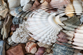 Water ripples above pebbles and seashells - PhotoDune Item for Sale