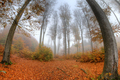 Misty haze in a beech forest in autumn - fish eye lens - PhotoDune Item for Sale