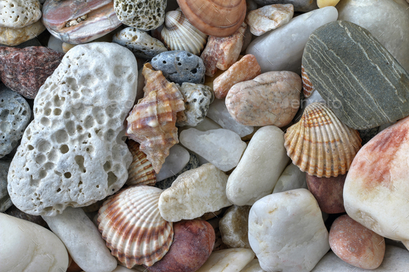Sea Pebbles With Shells - Stock Photo - Images