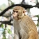 Portrait of a Young Monkey - VideoHive Item for Sale