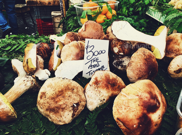 Porcini Mushrooms - Stock Photo - Images