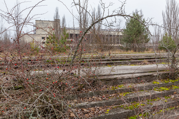 Central square in overgrown ghost city Pripyat. - Stock Photo - Images