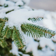 Fir tree in winter - PhotoDune Item for Sale