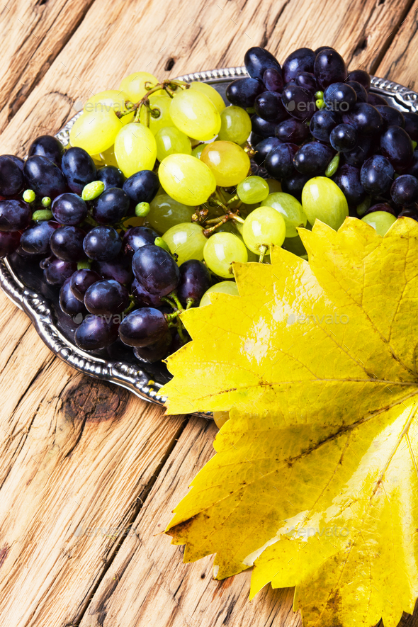 autumn grapes on tray - Stock Photo - Images