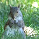 NYC Central Park - Squirrel with Nut - VideoHive Item for Sale