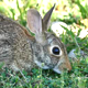 New York - Central Park - Hare on Grass - VideoHive Item for Sale