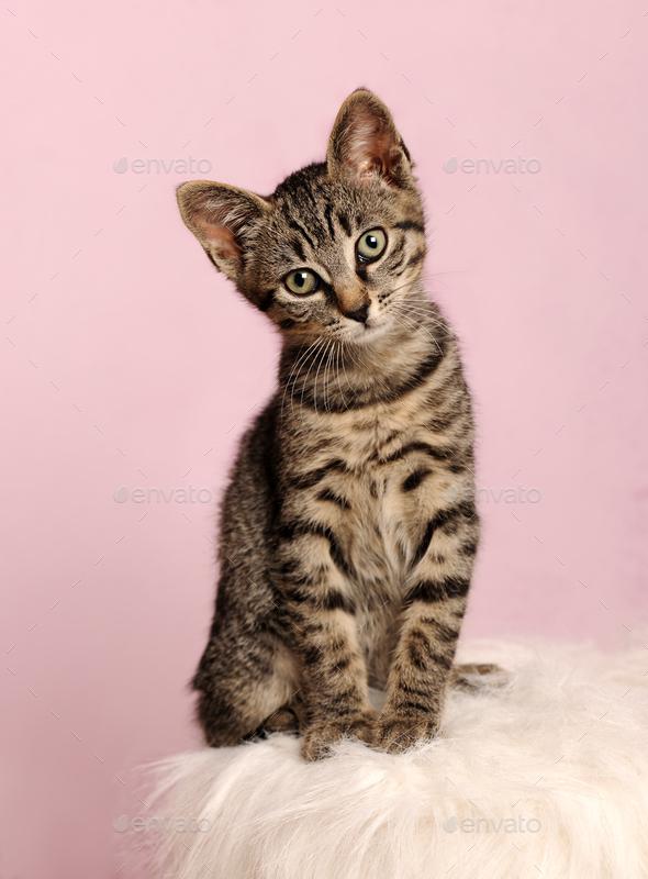 cute little kitten - Stock Photo - Images