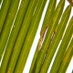 Green Coconut Palm Leaf Against Bright Sun on Paradise Beach - VideoHive Item for Sale