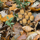 Mushroom family on dead leaves and wood. - PhotoDune Item for Sale