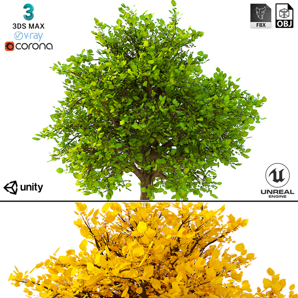 3DOcean Bush 3D Model No 2 3 Seasons 21137119