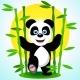 Panda Among the Bamboo