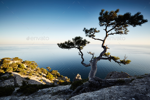 Tree and sea at sunset. Crimea landscape - Stock Photo - Images