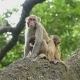 Family of Monkeys on a Tree - VideoHive Item for Sale