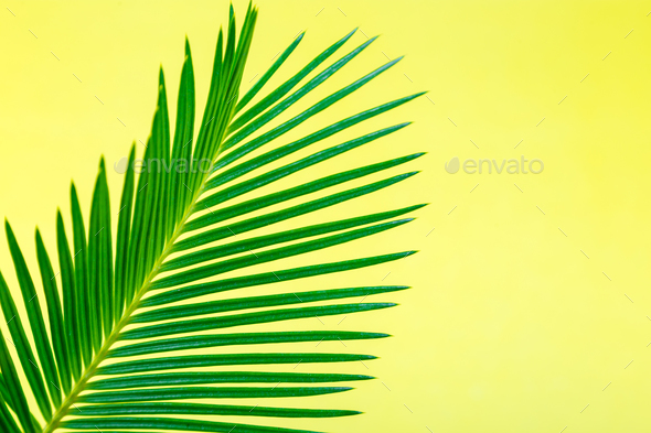 Tropical Background Palm Trees Branches. Holiday. Travel. Copy space. - Stock Photo - Images