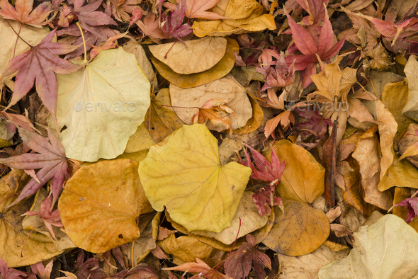Fallen leaves in Autumn - Stock Photo - Images