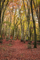 Beach forest in Autumn - PhotoDune Item for Sale