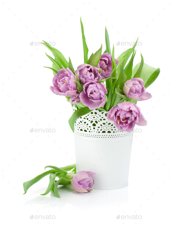 Pink tulips in metal flowerpot - Stock Photo - Images