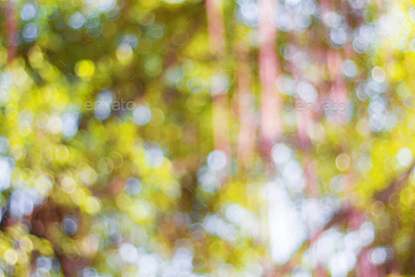Colorful bokeh at trees - Stock Photo - Images