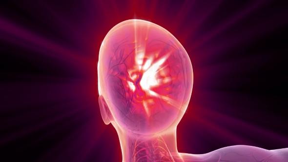 VideoHive Anatomy of Human Brain 21142789