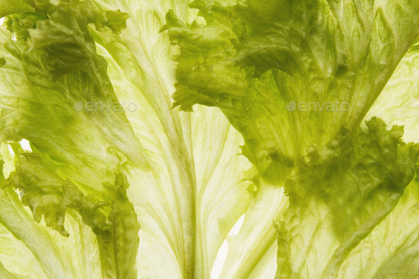 Green backlit lettuce leaves closeup - Stock Photo - Images