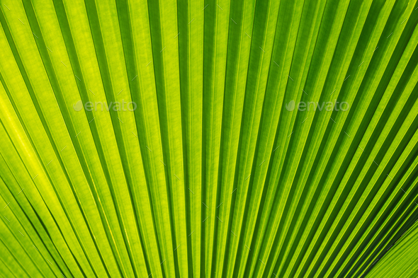 Green palm tree leaf as a background - Stock Photo - Images