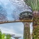Futuric Super Trees in Garden By the Bay at Singapore - VideoHive Item for Sale