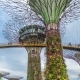 Futuric Super Trees in Garden By the Bay at Singapore. August 2017.  Move Up. - VideoHive Item for Sale