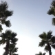 Panorama Palm Trees on Blue Sky Background - VideoHive Item for Sale