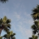 Panorama Palm Trees on Blue Sky Background. - VideoHive Item for Sale