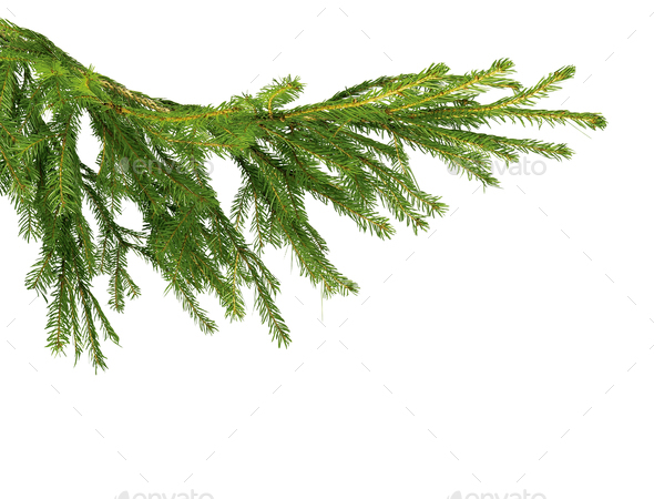 Fir tree branch isolated on white - Stock Photo - Images